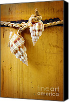 Souvenir Canvas Prints - Bamboo And Conches Canvas Print by Carlos Caetano