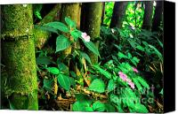 Puerto Rico Photo Canvas Prints - Bamboo and Impatiens El Yunque National Forest Canvas Print by Thomas R Fletcher
