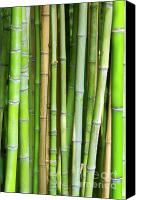 Cane Canvas Prints - Bamboo Background Canvas Print by Carlos Caetano