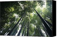 Asian Art Canvas Prints - Bamboo forest Canvas Print by Mitch Warner - Printscapes