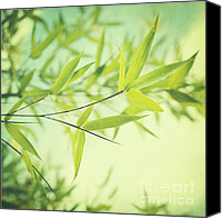 Bathroom Canvas Prints - Bamboo In The Sun Canvas Print by Priska Wettstein