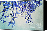 Evergreen Canvas Prints - Bamboo Susurration Canvas Print by Priska Wettstein