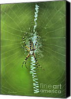Spider Web Canvas Prints - Banana Spider With Web Canvas Print by Deborah Benoit