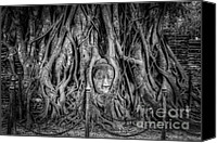 Ruin Digital Art Canvas Prints - Banyan Tree Canvas Print by Adrian Evans