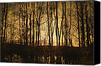 Skip Nall Canvas Prints - Bare Trees 3 Canvas Print by Skip Nall