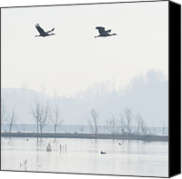 Animal Photo Canvas Prints - Bare Trees In Lake Canvas Print by Gary76973