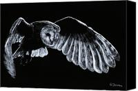 Bird Of Prey Canvas Prints - Barn Owl Canvas Print by Richard Young