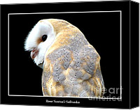 Father Christmas Canvas Prints - Barn Owl Canvas Print by Rose Santuci-Sofranko