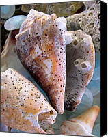 Life Is Beautiful Canvas Prints - Barnacles Canvas Print by Colleen Kammerer