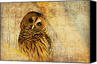 Textured Canvas Prints - Barred Owl Canvas Print by Lois Bryan