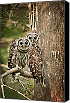 Barred Owl Canvas Prints - Barred Owl Pair Canvas Print by Bonnie Barry