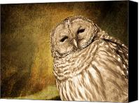 Barred Owl Canvas Prints - Barred Owl with Textured background Canvas Print by Michel Soucy