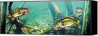 Largemouth Bass Canvas Prints - Bass Lake Canvas Print by JQ Licensing