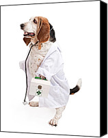 Pet Photo Canvas Prints - Basset Hound Dog Dressed as a Veterinarian Canvas Print by Susan  Schmitz