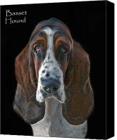 Hound Canvas Prints - Basset Hound Canvas Print by Larry Linton