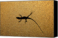 Lizard Canvas Prints - Bathroom Window Lizard Canvas Print by Bill Adams - MomentsNow.com