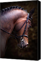 Bridle Canvas Prints - Bay Horse Head Canvas Print by Ethiriel  Photography