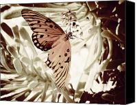 Tropical Beach Canvas Prints - Beach Butterfly I-Sepia Play Canvas Print by Chris Andruskiewicz