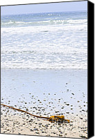 Long Canvas Prints - Beach detail on Pacific ocean coast Canvas Print by Elena Elisseeva
