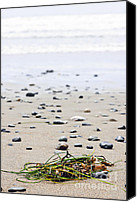 Pacific Canvas Prints - Beach detail on Pacific ocean coast of Canada Canvas Print by Elena Elisseeva