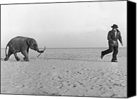 Elephant Running Canvas Prints - Beach Elephant Canvas Print by John Drysdale