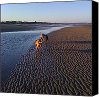 Bestfriends Canvas Prints - #beach #sunset #sand #dogs #bestfriends Canvas Print by Regan Webb