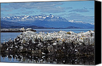 Fuego Canvas Prints - Beagle Channel - Tierra del Fuego Canvas Print by Juergen Weiss