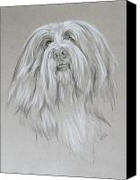 Pets Canvas Prints - Bearded Collie Canvas Print by Barbara Keith