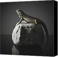 Dragon Photo Canvas Prints - Bearded Dragon On Rock Canvas Print by Darren Woolridge Photography - www.DarrenWoolridge.com