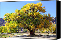 Gnarly Canvas Prints - Beautiful Autumn Tree Canvas Print by Gary Whitton