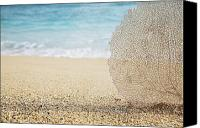 Brandon Tabiolo Canvas Prints - Beautiful Coral Element 1 Canvas Print by Brandon Tabiolo - Printscapes