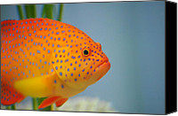 Michael Krahl Canvas Prints - Beautiful Fish Canvas Print by Michael Krahl