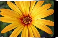 Michael Krahl Canvas Prints - Beautiful Flower Canvas Print by Michael Krahl