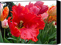 Phillie Canvas Prints - Beautiful From Inside and Out - Parrot Tulips in Philadelphia Canvas Print by Carol Senske