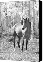 James Insogna Canvas Prints - Beautiful Horse in Black and White Canvas Print by James Bo Insogna