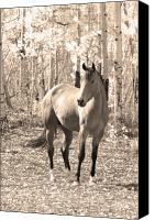 "\""striking Photography\\\"" Canvas Prints - Beautiful Horse In Sepia Canvas Print by James Bo Insogna"
