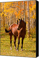 Insogna Canvas Prints - Beautiful Horse in the Autumn Aspen Colors Canvas Print by James Bo Insogna
