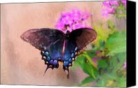 Pipevine Swallowtail Butterfly Digital Art Canvas Prints - Beautiful Morning Canvas Print by Betty LaRue