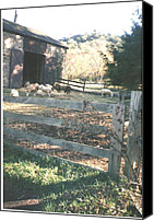 Thelma Harcum Canvas Prints - Beautiful Sheep Near Barn Canvas Print by Thelma Harcum