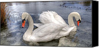 Blue Swan Canvas Prints - Beautiful Swans Canvas Print by Svetlana Sewell