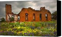 Texas Bluebonnets Canvas Prints - Beauty and Ashes Canvas Print by Jon Holiday