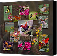 Digiart Canvas Prints - Beauty in Butterflies Canvas Print by DigiArt Diaries by Vicky Browning