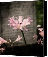 Beautiful Pink Flowers Canvas Prints - Beauty in Death Canvas Print by Michelle Sheppard