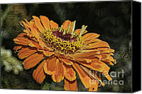 Closeup Mixed Media Canvas Prints - Beauty In Orange Petals Canvas Print by Deborah Benoit
