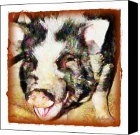 Pot-bellied Pig Canvas Prints - Beauty is in the Eyes of the Beholder Canvas Print by Terry Mulligan