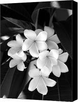 Plumeria Canvas Prints - Beauty Is Simple Canvas Print by Vilma Rohena