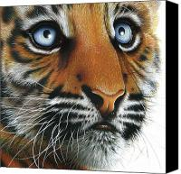 Cub Canvas Prints - Beauty of my Mothers Eyes Canvas Print by Jurek Zamoyski