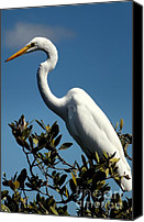 Crane Canvas Prints - Beauty of Sanibel Canvas Print by Karen Wiles