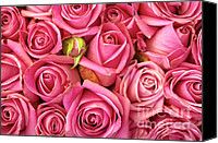 Love Canvas Prints - Bed Of Roses Canvas Print by Carlos Caetano