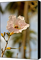 Featured Special Promotions - Bee In Paradise Canvas Print by Felix Zapata
